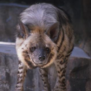Zwierzęta domowe i dzikie